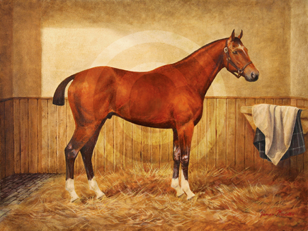 Ali Bannister's portrait of Joey, a.k.a. War Horse