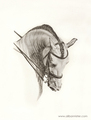 The Spanish Horse